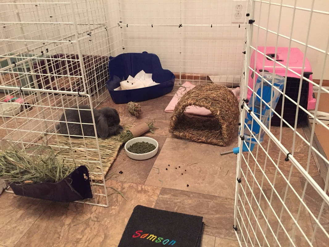 Litter Training A Rabbit - Can I Litter Train my Bunny? - Ohio ...