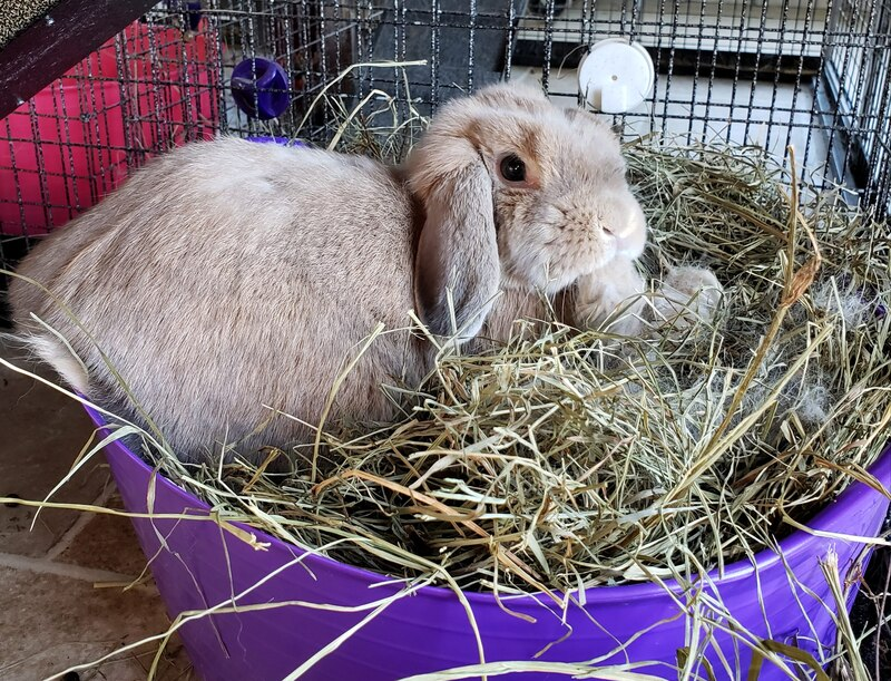 Hay tub container for rabbits