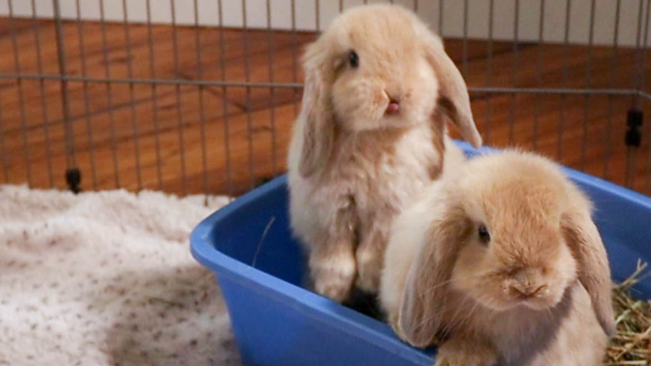 hay in bunny litter box