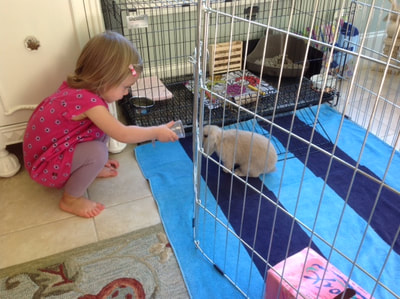 Rabbit Exercise Pen